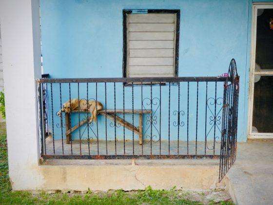 Un chien relaxe à Sarteneja, projet FAVI Belize
