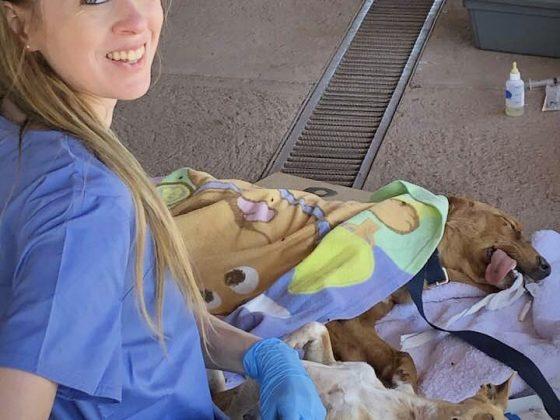 Stéphanie, technicienne en santé animale, s'occupe du réveil des animaux.