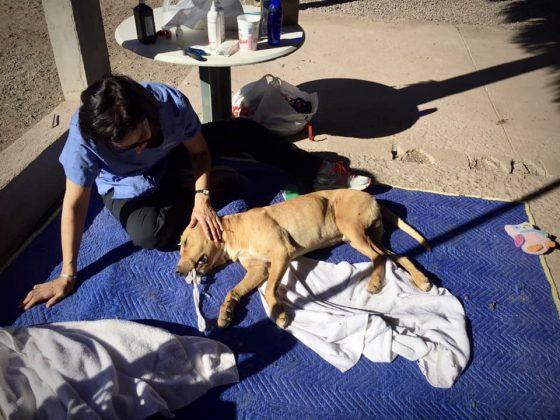 Caroline, bénévole FAVI, supervise le réveil d'un patient lors de notre clinique