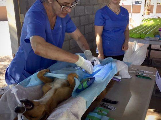 Dre Isabelle, vétérinaire bénévole FAVI au Mexique