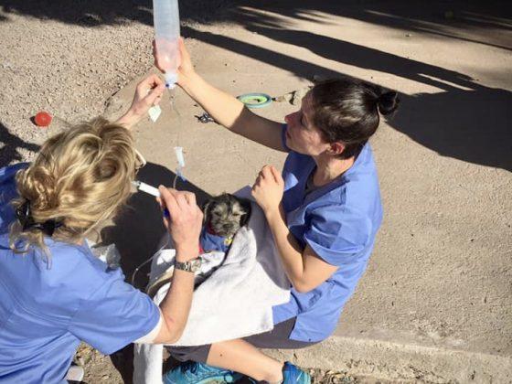 Des bénévoles de la FAVI s'occupent d'un petit patient au refuge Animalandia au Mexique