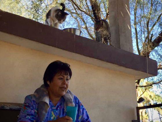 Lucy du refuge Animalandia et ses pensionnaires félins qui vivent sur le toit!