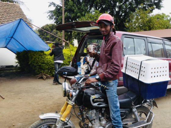 Transport adapté pour chien en Tanzanie