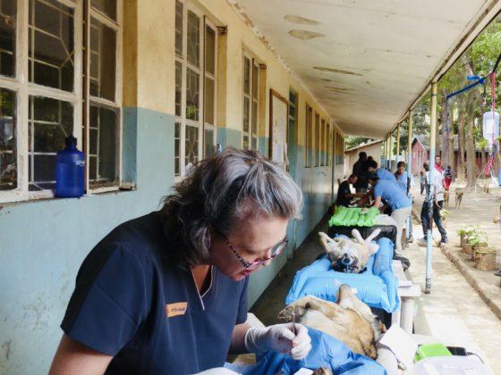Zone opératoire à la clinique de la FAVI en Tanzanie