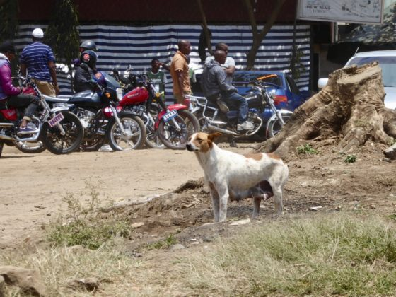 Une chienne de la rue à Arusha, Tanzanie