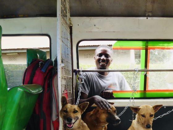 Le conducteur du minibus avec les chiens de la rue