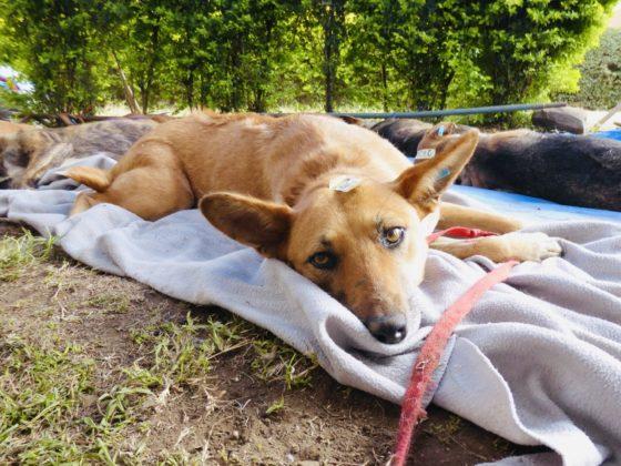 Un chien au réveil à la clinique FAVI en Tanzanie