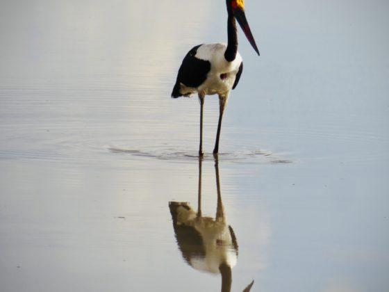 Oiseau dans le parc national Tarangire en Tanzanie