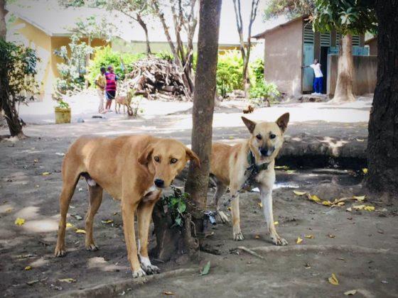 Ils attendent patiemment leur tour à la station de vaccination