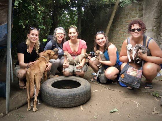 Visite du refuge Mbwa Wa Africa