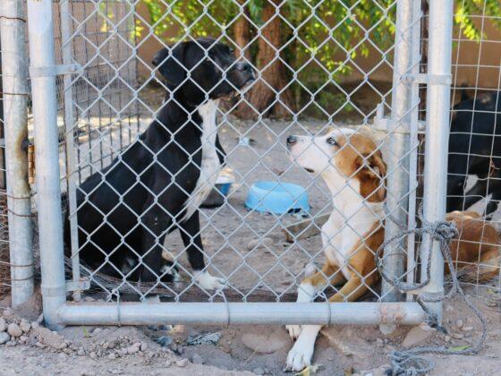 Pensionnaires au refuge Animalandia de Loreto