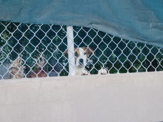 Un pensionnaire au refuge Animalandia à Loreto, Mexique