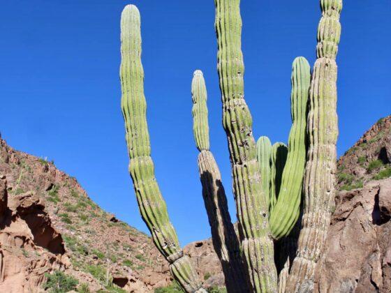 Espiritu Santo, Baja California