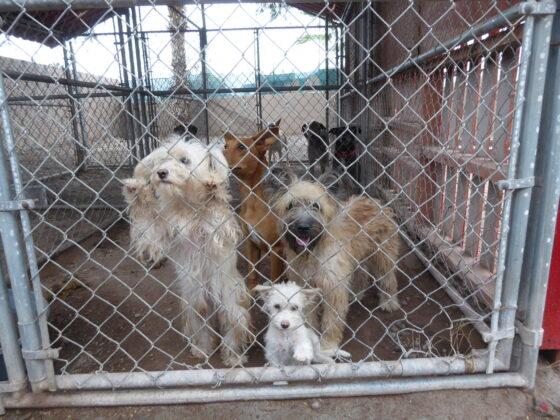 Des pensionnaires au refuge Animalandia à Loreto, Mexique