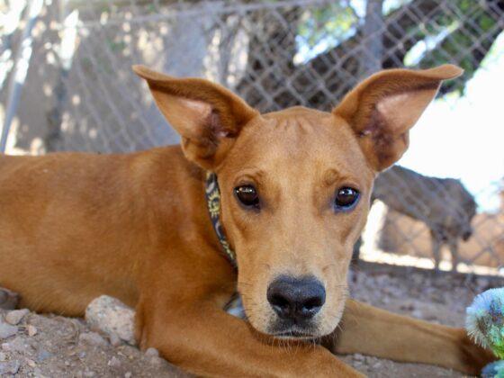 Un de nos chiens chouchou au refuge Animalandia à Loreto