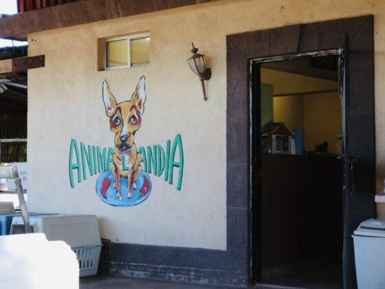 Entrée de la clinique vétérinaire au refuge Animalandia de Loreto