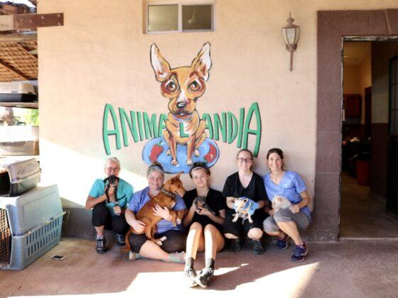 La petite équipe de la FAVI au refuge Animalandia de Loreto