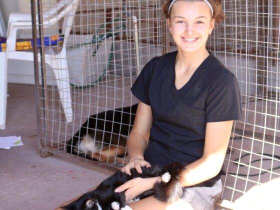 Alyssa, une bénévole, surveille le réveil d'un chat au refuge Animalandia