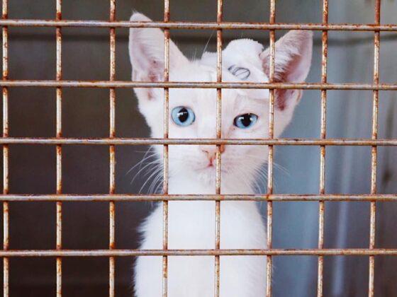 Mignon petit patient félin à Animalandia, Loreto