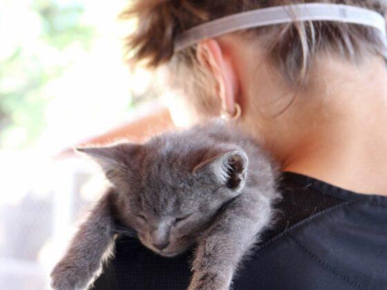 Alyssa supervise le réveil d'un chaton au refuge Animalandia