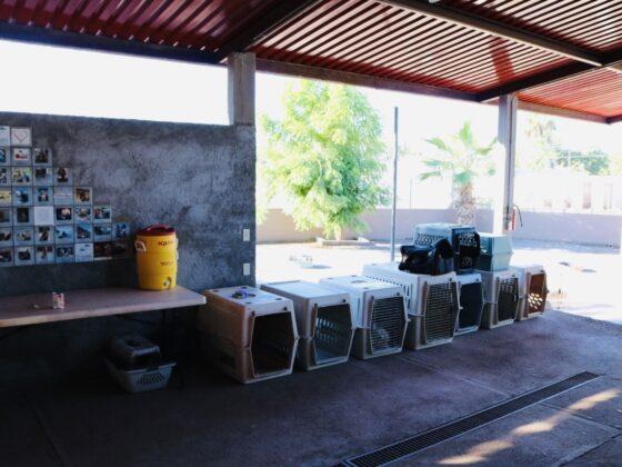 Refuge Animalandia à Loreto. Propreté exemplaire!
