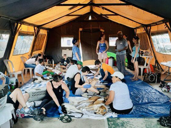 Station de réveil sous la tente à la clinique FAVI-CAWS à San Ignacio, Belize