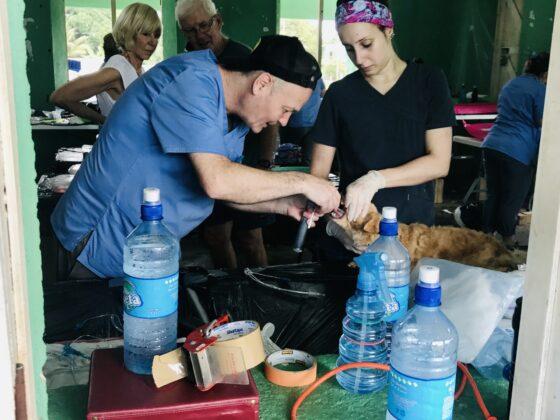 Intubation d'un chien à la clinique FAVI au Belize