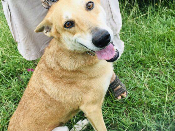 Un chien à la clinique FAVI au Belize