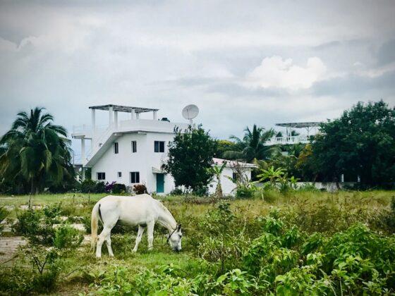 Notre voisin à Sarteneja , Belize