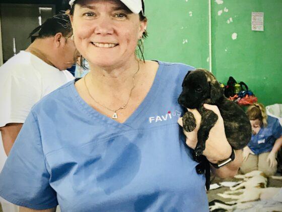 Une bénévole de la FAVI réconforte un chiot à la clinique FAVI au Belize