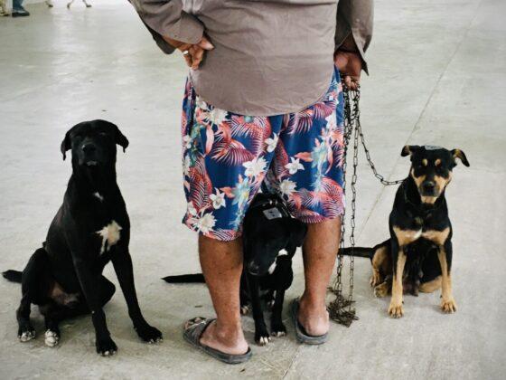 Des chiens attendent leur tour à la clinique FAVI au Belize