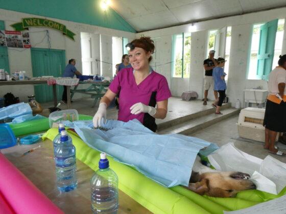 Vétérinaire bénévole pour la FAVI au Belize