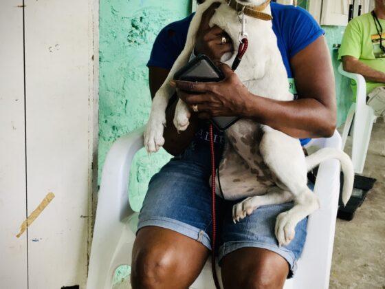 Rachel, une bénévole de Corozal Animal Program (CAP) réconforte une petite chienne