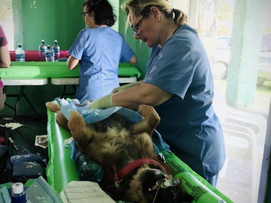Chirurgie à la clinique FAVI au Belize