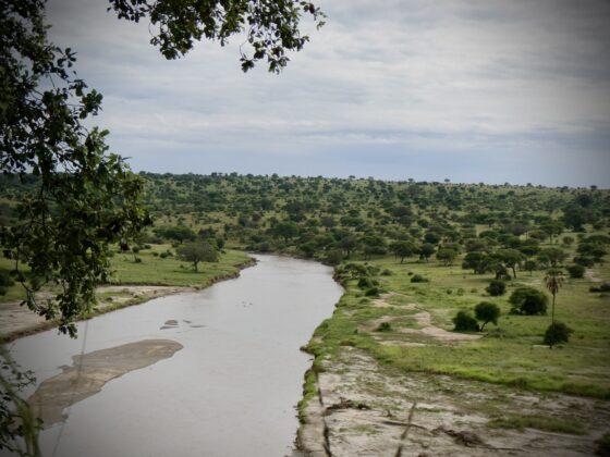 Tarangire, safari FAVI Tanzanie
