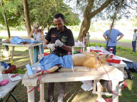 Dr Phillipo, vétérinaire tanzanien au travail!