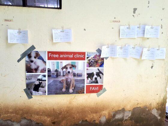 Tableau des stérilisations à venir à la clinique FAVI en Tanzanie