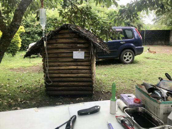 Zone préopératoire au refuge Mbwa Wa Africa