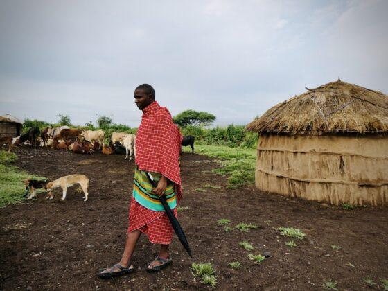 Visite d'un Boma avec un massaï, safari FAVI Tanzanie