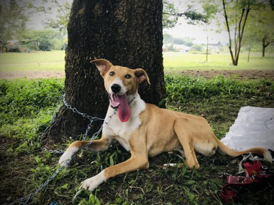 Un chien de la rue à la clinique FAVI en Tanzanie