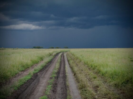 Temps orageux dans le Serengeti, safari FAVI Tanzanie
