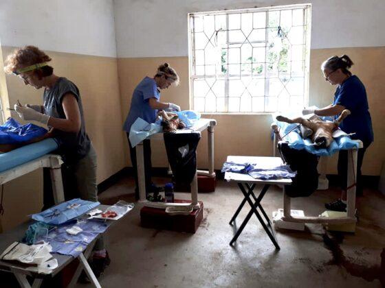 Zone de chirurgie clinique vétérinaire FAVI en Tanzanie