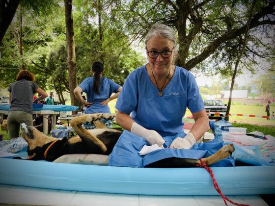 Dre Marie, vétérinaire bénévole FAVI en chirurgie en Tanzanie
